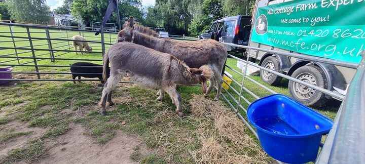 Photos from Mill Cottage Farm Experience's post